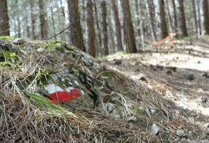 Via francigena rock in forest