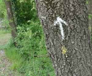 Via Francigena tree arrow sign