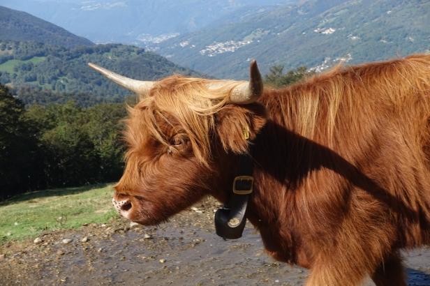 Ticino cattle bells