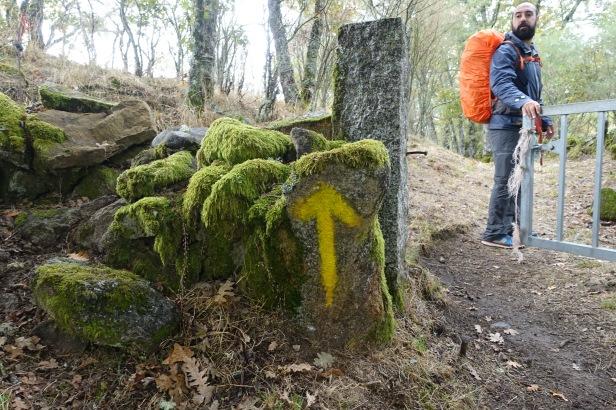 Camino Sanabrés yellow arrow