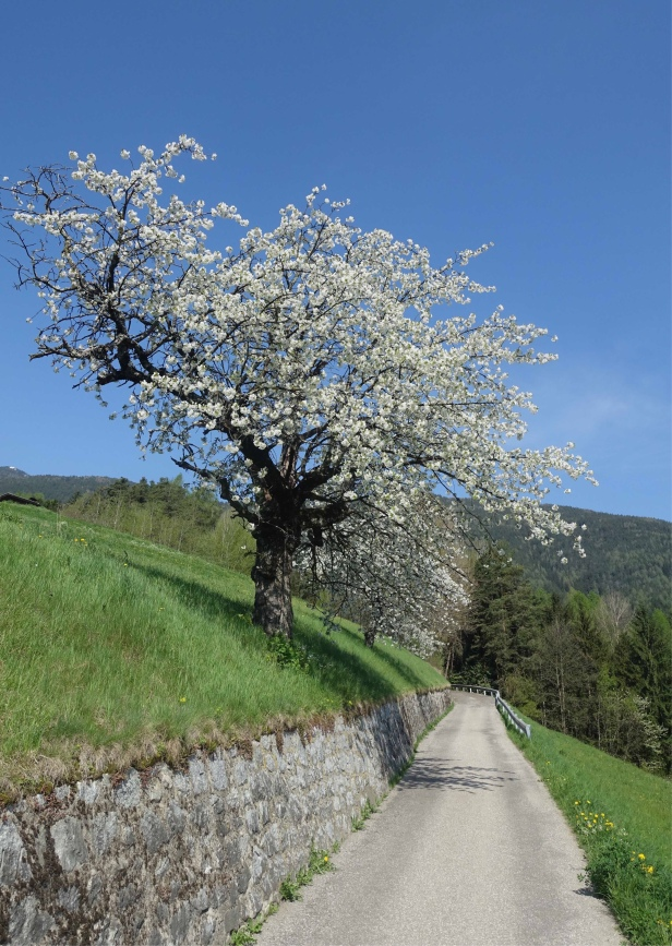 Via Romea Germanica italy Chiusa