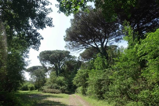 Via Romea Germanica Casalborsetti