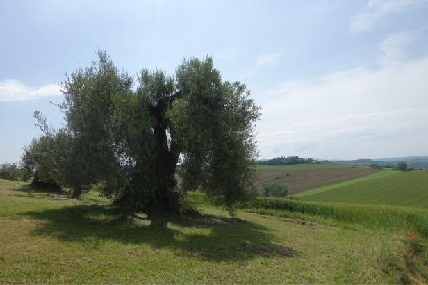 Via romea Germanica Pozzuolo